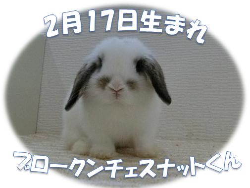 2月17日生まれBKNチェスナットくん