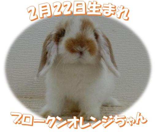2月22日生まれBKNオレンジちゃん