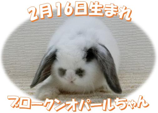 2月16日生まれBKNオパールちゃん