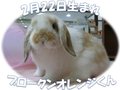 2月22日生まれBKNオレンジくん