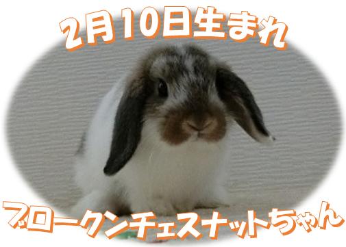 2月10日生まれBKNチェスナットちゃん