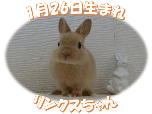 1月26日生まれNDリンクスちゃん