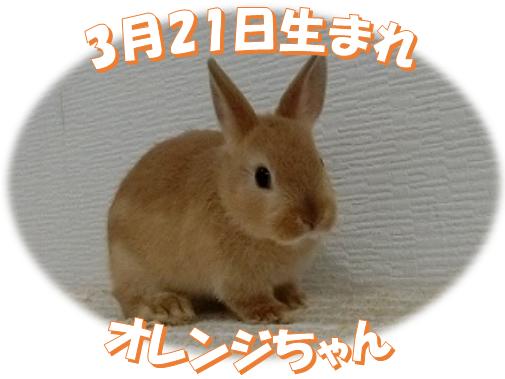 3月21日生まれNDオレンジちゃん