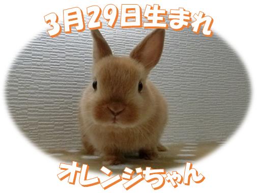 3月29日生まれNDオレンジちゃん