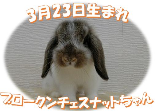 3月23日生まれBKNチェスナットちゃん