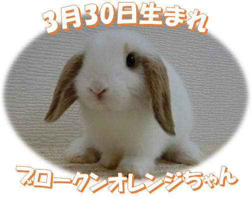 3月30日生まれBKNオレンジちゃん