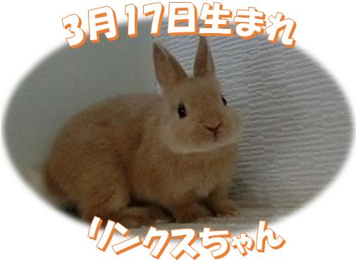 3月17日生まれNDリンクスちゃん