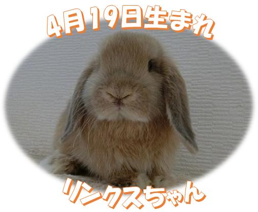 4月19日生まれHLリンクスちゃん