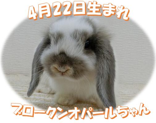 4月22日生まれBKNオパールちゃん