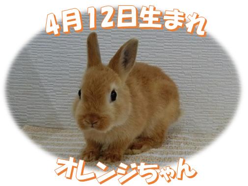 オレンジちゃん4月12日生まれND