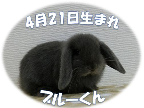 ブルーくん4月21日生まれHL