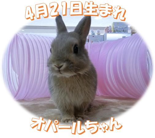 4月21日生まれNDオパールちゃん