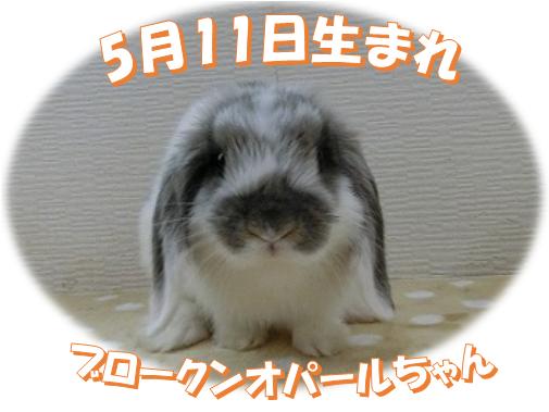 5月11日生まれBKNオパールちゃん