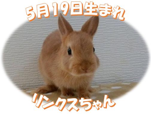 5月19日生まれリンクスNDちゃん