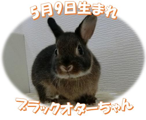5月9日生まれブラックオターちゃん