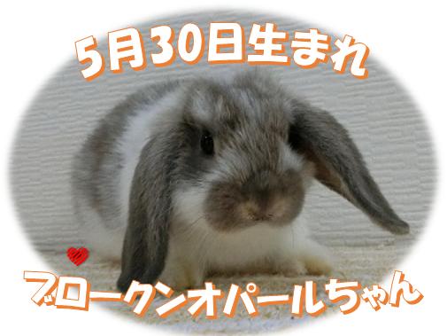 5月30日生まれブロークンオパールちゃん