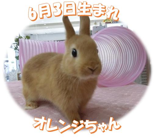 6月3日生まれNDオレンジちゃん