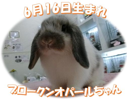 6月16日生まれHLブロークンオパールちゃん