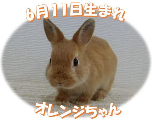 6月11日生まれNDオレンジちゃん