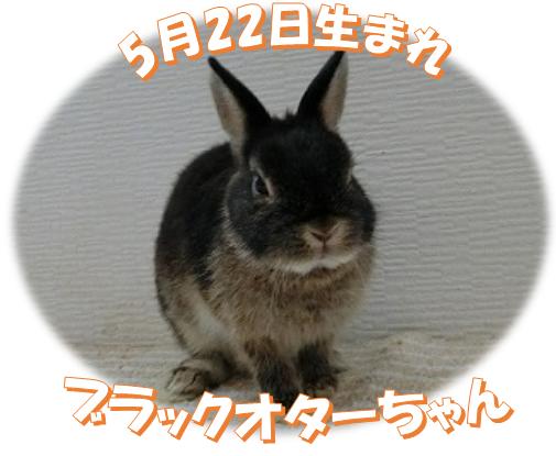 5月22日生まれブラックオターちゃん