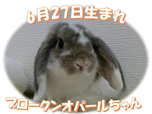 6月27日生まれブロークンオパールちゃん
