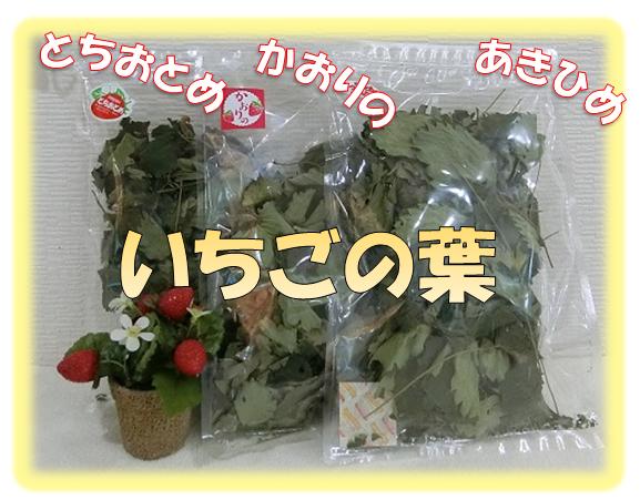 イチゴの葉