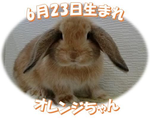 6月23日生まれHLオレンジちゃん