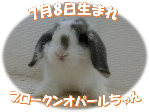7月8日生まれBKNオパールちゃん