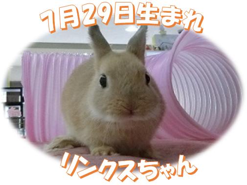 7月29日生まれNDリンクスちゃん
