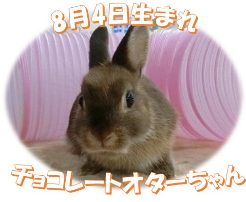 8月4日生まれNDチョコレートオターちゃん