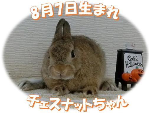 8月7日生まれNDチェスナットちゃん