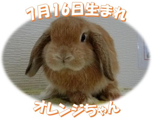 7月16日生まれHLオレンジちゃん