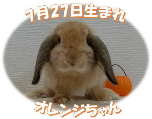 7月27日生まれHLオレンジちゃん
