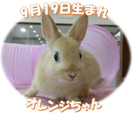 9月19日生まれNDオレンジちゃん