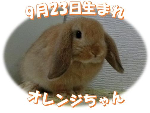 9月23日生まれHLオレンジちゃん