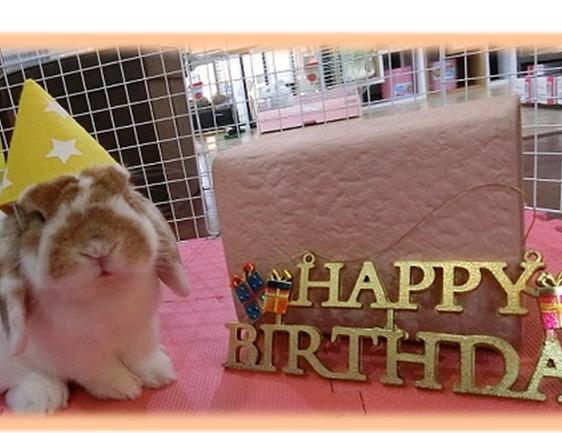 リンリン誕生日