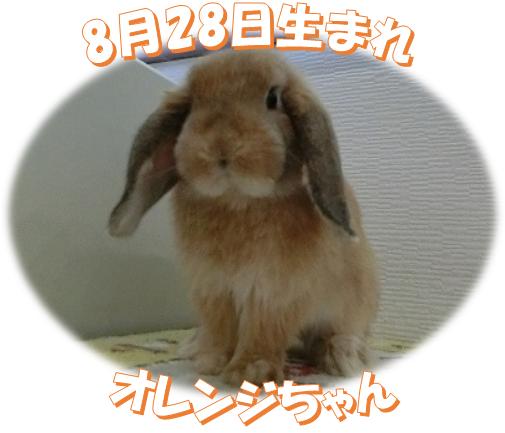 8月28日生まれHOオレンジちゃん