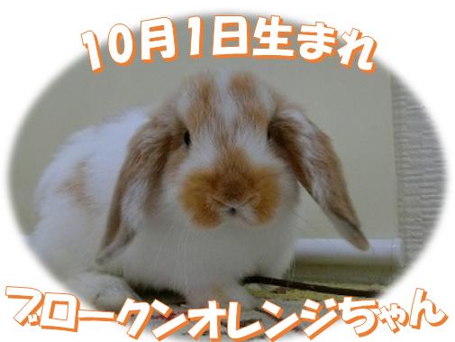 10月1日生まれBKNオレンジちゃん