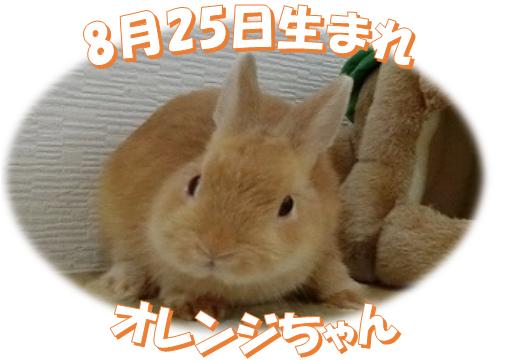 8月25日生まれNDオレンジちゃん