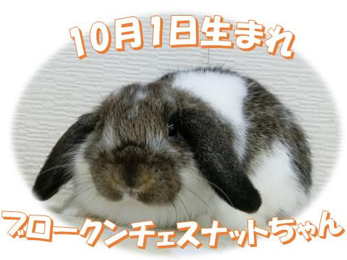 10月1日生まれブロークンチェスナットちゃん