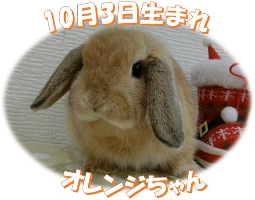 10月3日生まれHLオレンジちゃん