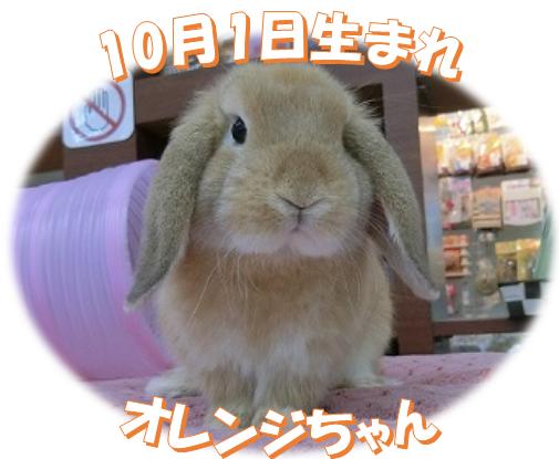 10月1日生まれHLオレンジちゃん