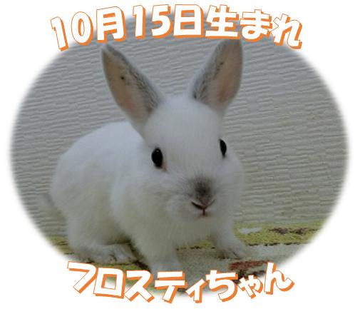 10月15日生まれNDフロスティちゃん
