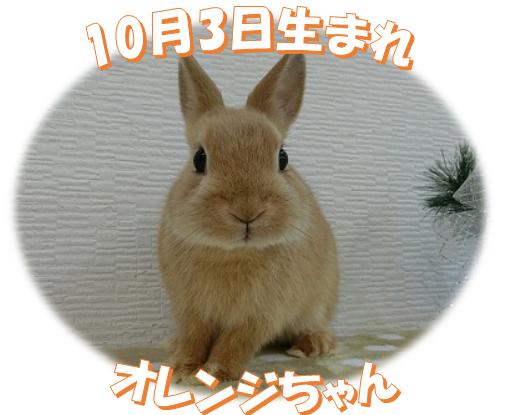 10月3日生まれNDオレンジちゃん