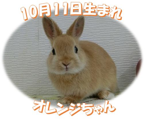 10月11日生まれNDオレンジちゃん