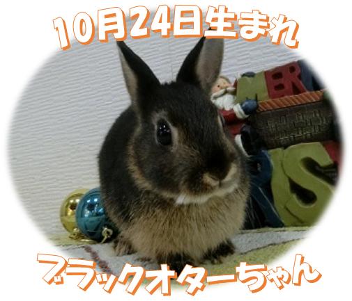 10月24日生まれブラックオターちゃん
