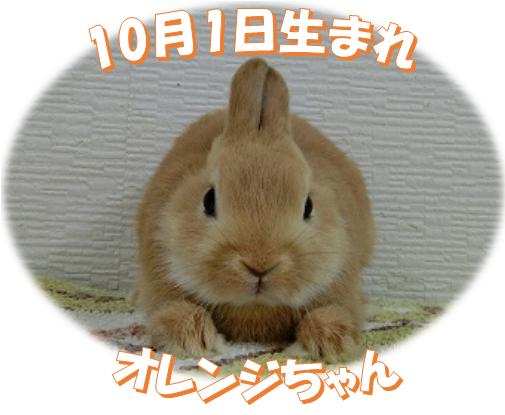 10月1日生まれNDオレンジちゃん