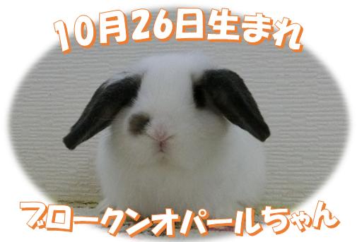 10月26日生まれBKNオパールちゃん