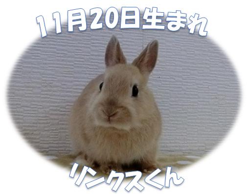 11月20日生まれNDリンクスくん