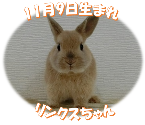 11月9日生まれNDリンクスちゃん